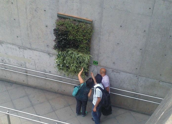 Grupo cria jardim vertical com calça jeans